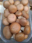 champignons blonds 500 gr